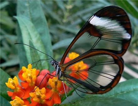 papillontranslucide2.jpg